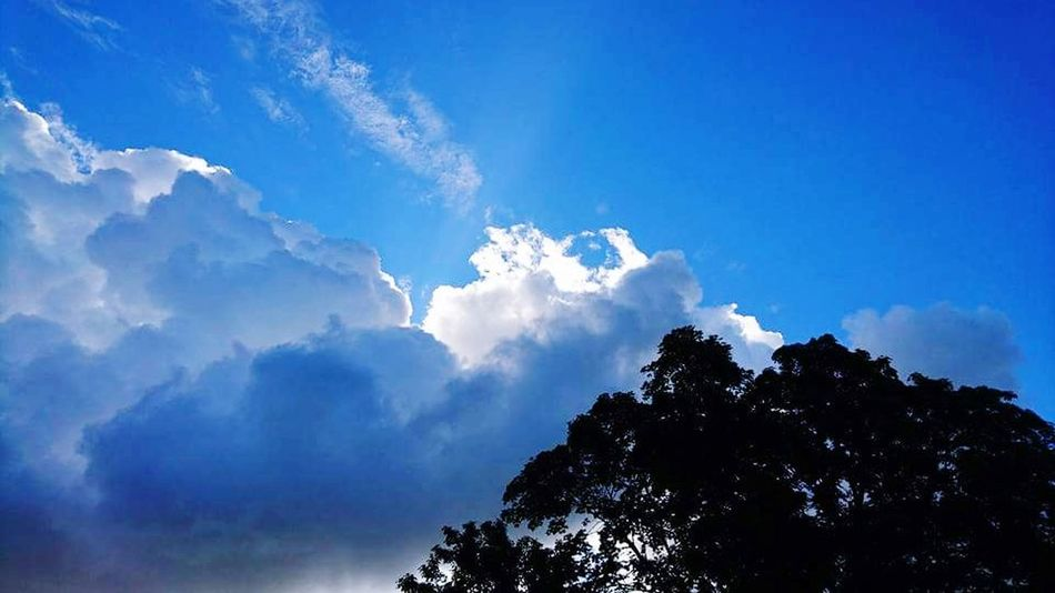 Cloud - Sky Tree Blue Sky Nature Mountain Beauty In Nature Forest Outdoors Pinaceae No People Day Vacations Freshness