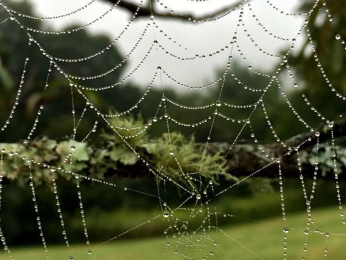 Nature bejeweled Spider Web Dew Drops On Web Dew Drops On Spider Web Macro Nature Camera+ Webs We Weave