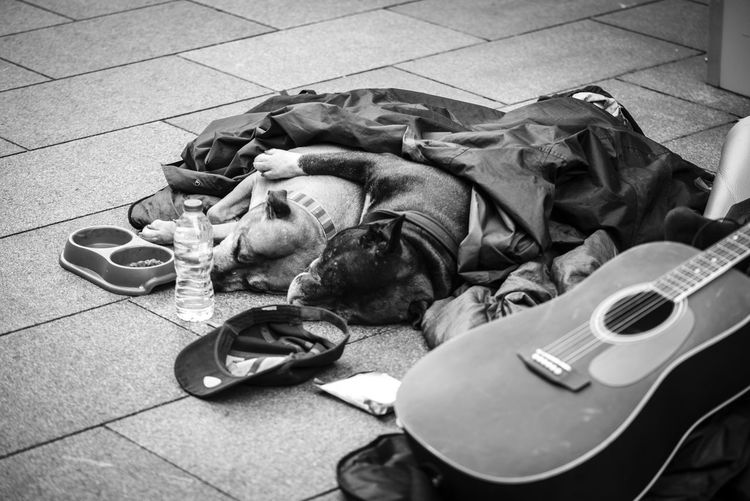 Animal Love Hugging Animal Animal Themes Beggar Caring City Dog Domestic Animals Guitar Lying Down Music Musical Instrument Resting Social Issues Street Streetphotography Two Animals