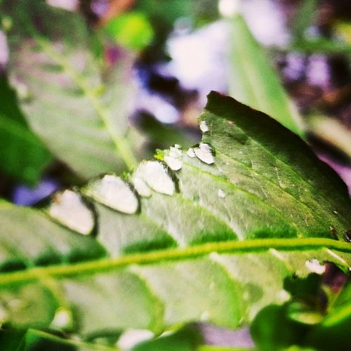 Nature Close-up Beauty In Nature Growth Insect Leaf Plant No People Outdoors Animal Themes Day Flower Fragility Freshness Tree Morningdew Environment Kampunglife MorningDewdrops Nature Green Color Tropical Climate