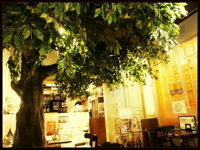 Cafe Torinoirucafe