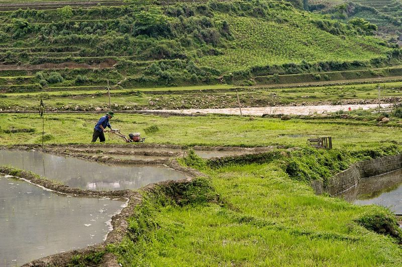 Vietnam sapa EyeEm Best Shots EyeEmBestPics EyeEm Gallery EyeEm Selects Reflection Discovery Popular Photos Popular Green Color Men Day Water Real People Agriculture Farmer Landscape Working Occupation Nature Plant Field Rural Scene High Angle View Farm Land Growth One Person Outdoors