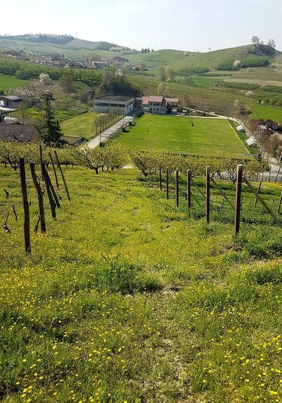 Agriculture Growth Rural Scene Farm Field Scenics Tranquil Scene Crop  Beauty In Nature Vineyard Nature Landscape Winemaking Tranquility Outdoors Green Color No People Sky Tree Day Piedmont Italy Langhe Roero EyeEmNewHere Spring Blooms