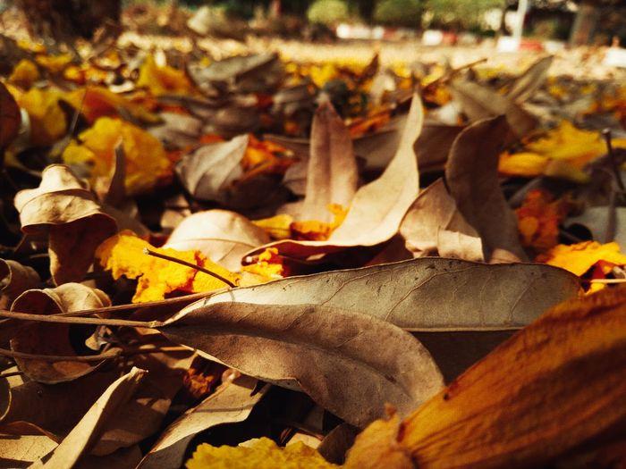 Fall. Nature Sunlight First Eyeem Photo