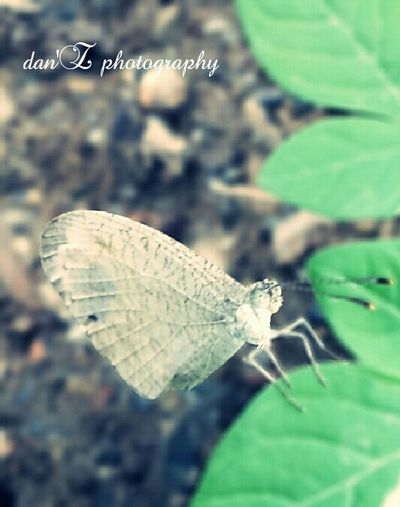 Butterfly by samsung 8mp Butterfly Macro
