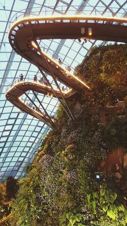 Tree Low Angle View Adapted To The City Cloud Forest Dome Bridge Canopywalk CanopyWalkway Indoors  Outdoors Architecture Day Greenhouse Greenery Plants Neighborhood Map