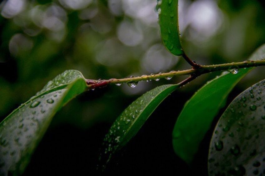 Growth Close-up Drop Leaf Plant Nature Green Color Wet Focus On Foreground No People Beauty In Nature Freshness Outdoors Water Fragility Day