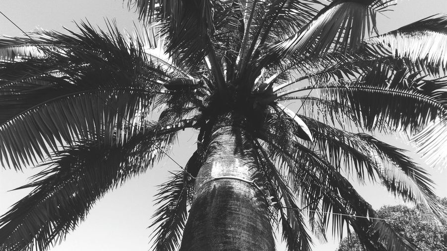 palm Naturelovers Simplicity Black_white Samsungphotography Samsung X5