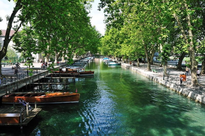 Boats moored in canal along trees