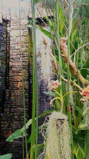 Sunlight Botanical Chlorophyll Plants 🌱 Botanical Gardens EyeEm Nature Lover Plants Green House Plants And Flowers Botanical Garden Orchids Flowers Waterfall Spanish Moss