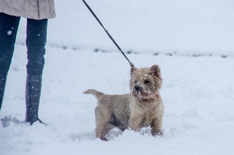Snowday! I had