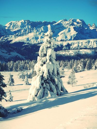 Snow Snowsnowsnow.  Sunnyday Winter