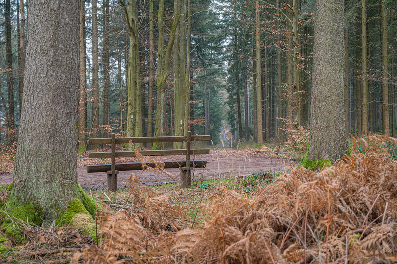 Empty bench in forest