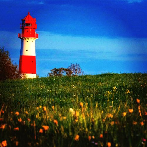 Lighthouse. Northsea Germany Plant Built Structure Flowering Plant Architecture
