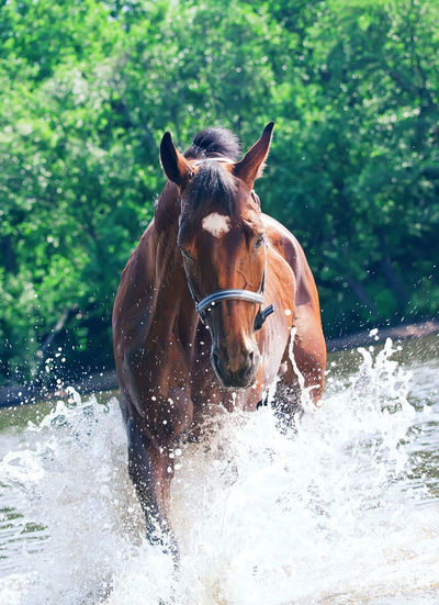 Portrait Of Horse In Water