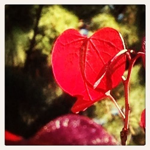 The Love tree.