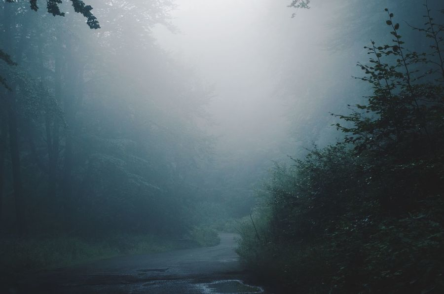 Summer Rainy Misty Mist Mountain Tranquility Nature Nature Tree Sky Water Beauty In Nature No People Plant Scenics - Nature Tranquil Scene Low Angle View Outdoors Fog Blue Land Non-urban Scene Growth Day Rain Coniferous Tree