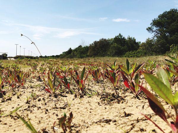 Plant Growth Land Field Landscape Sky Tree Nature Sunlight