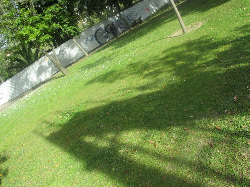 Architecture Beautiful Details Beautiful Shadow Beauty In Nature Branches Day EyeEmNewHere Field Forms And Shapes Grass Green Color Green Grass Interesting Shadows Light Green Color Nature No People Outdoors Park Park - Man Made Space Shadow Shadow On The Grass Springtime Sunlight Sunny Day Tree