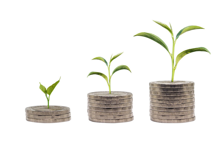 Trees growing on pile of coins money isolated on white background. Business success concept. Growing money concept. Beginnings Business Close-up Day Finance Fragility Green Color Growth Indoors  Leaf Nature New Life No People Plant Planting Potted Plant Sapling Savings White Background