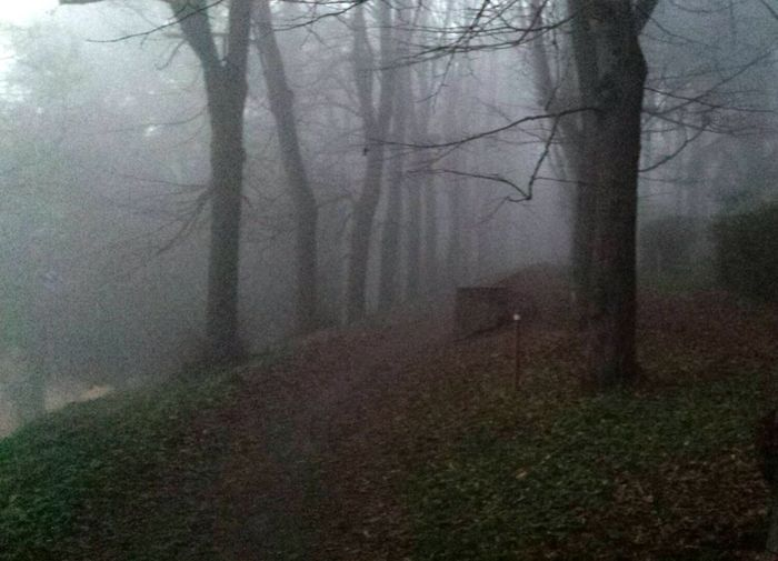 Bosco Novembre Nebbia Passeggiata Tristezza Uggiosa Campagna
