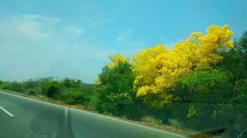 Beauty In Nature Car Car Interior Day Growth Land Vehicle Mode Of Transport Nature No People Outdoors Road Sky Transportation Tree Windshield Yellow