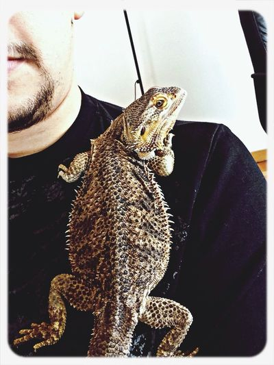 Relaxing with Bearded Dragon
