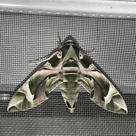 Balkonuma konan bu Kelebek Uğur Sans Mutluluk ve huzurun devamını getirsin hayatımıza inşallah! butterflyluckyhappylovemydreamdream