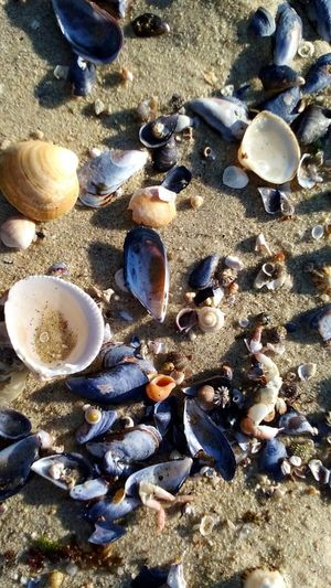 High Angle View Sunlight Nature No People Animal Themes Large Group Of Animals Outdoors Animals In The Wild Sea Life Day Close-up Sand Beach Beauty In Nature Water Shells Pontevedra Bueu Agrelo