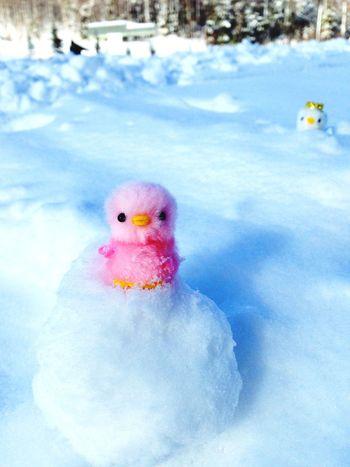 Japan Snow Nagano