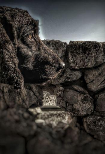 Woof Close-up A Dog Fluffy Dog Animal Dog Photography Doggy Dogs Life Petlove  Petlove  Dog Pets One Animal Animal Themes Domestic Animals Streetphotography PalmadeMalllorca Balearic Islands Lensblur Pet Portraits