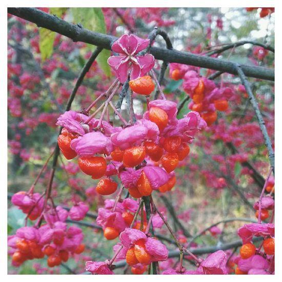 краски осени Autumn Colors осень Fall Autumn EyeEm VSCO 🌸🌸🌸