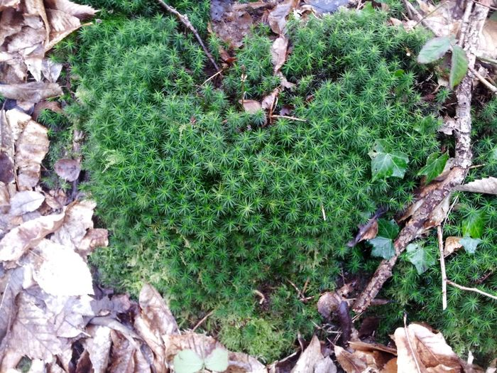 Beauty In Nature Close-up Green Nature_perfection Beautiful Nature Plant Eye Em Nature Lover No People Nature Photography Heart MossGreen Color Heart ❤ Nature