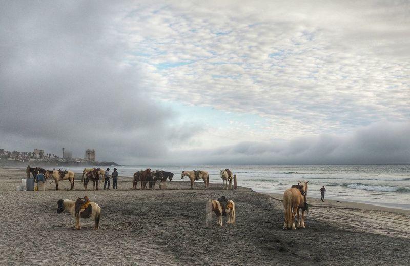 Pony horses at beach against cloudy sky