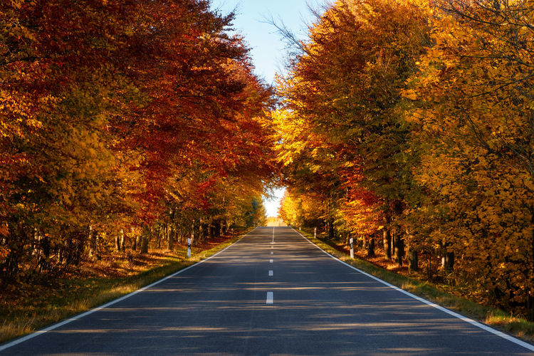 Road amidst trees during autumn