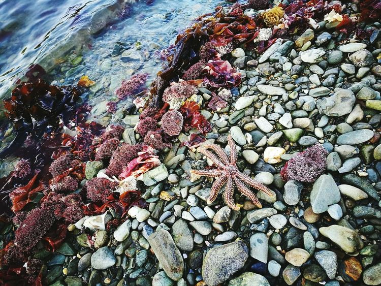 Starfish  Travel Ocean Wild Life Sea Beach Stone Pattern Picton  New Zealand Nature