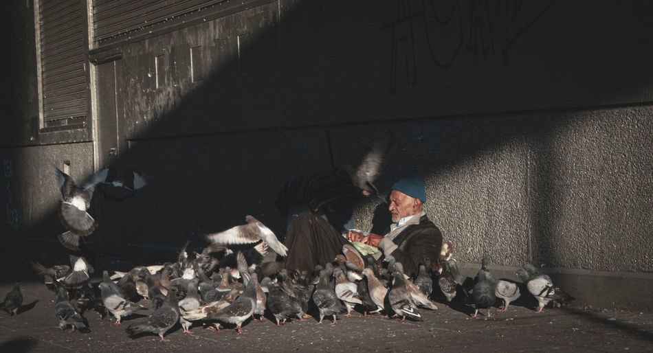 Beggar feeding birds while sitting on street
