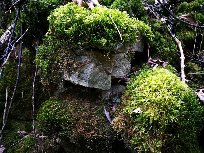 Nature No People Moss Mosscovered Mosscovered Rocks Rock - Object Rocks Close-up Growing Plant Life Overgrown Rock Formation