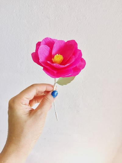 Close-up of human hand holding artificial pink flower against wall