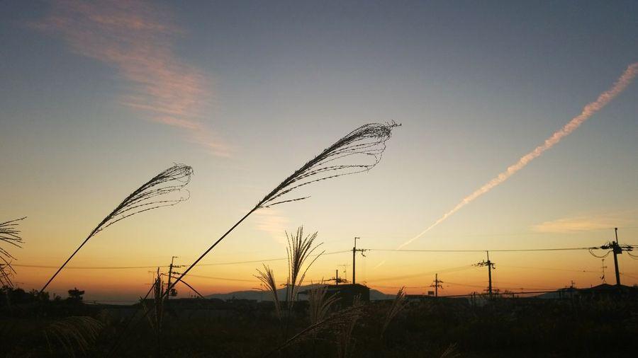 夕方 夕焼け Sunset Sky すすき