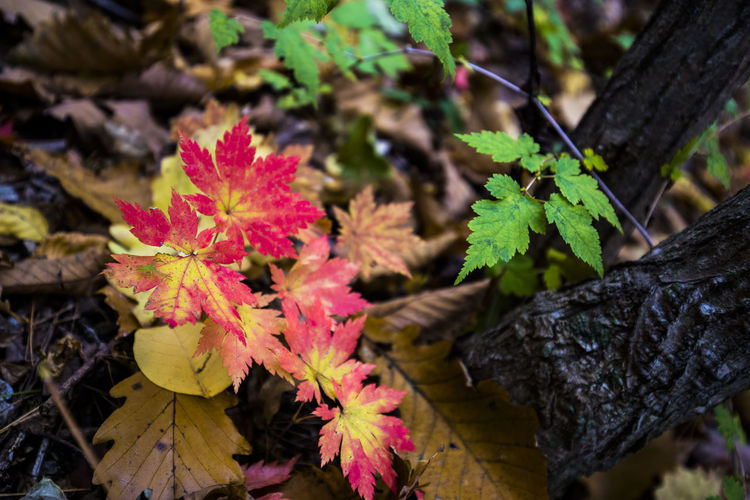 Korea, in the mountain Autumn Autumn Colors Fall Beauty Fall Colors Fallen Leaf Red Autumn Color Autumn🍁🍁🍁 Fall Fall Leaves Fallen Fallen Leaves Maple Maple Leaf Maple Leaves Mapleleaf On The Ground Red Color EyeEmNewHere