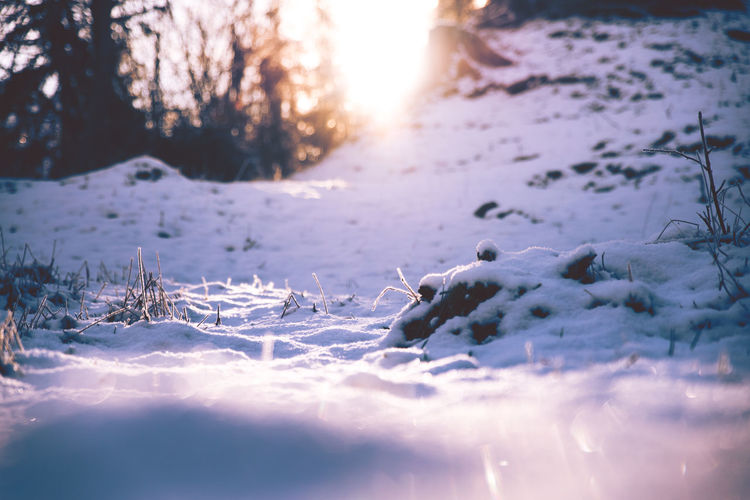 Cold Temperature Winter Snow Nature Frozen Tranquility Beauty In Nature Tree Plant Covering No People Ice Sunlight Land Sunset Tranquil Scene Field Day White Color Outdoors Cold