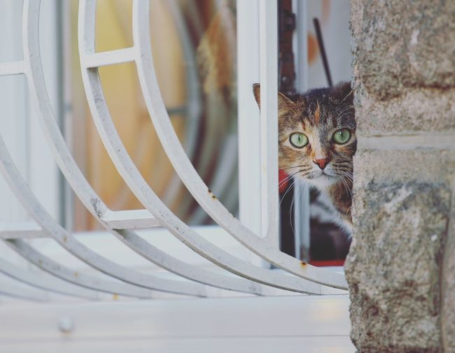 Animal Animal Head  Animal Themes Cat Close-up Domestic Animals Domestic Cat Kitty Looking At Camera No People One Animal Pets Staring Window Adapted To The City
