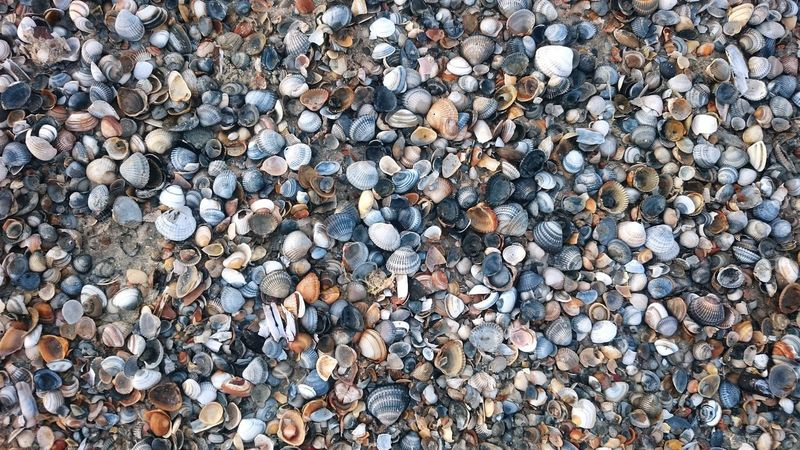 Full Frame Abundance Backgrounds Large Group Of Objects Day No People Outdoors Close-up Pebble Beach Shells Beach Beachphotography Nature Ocean Norderney Beauty In Nature Small Objects Shells Beach