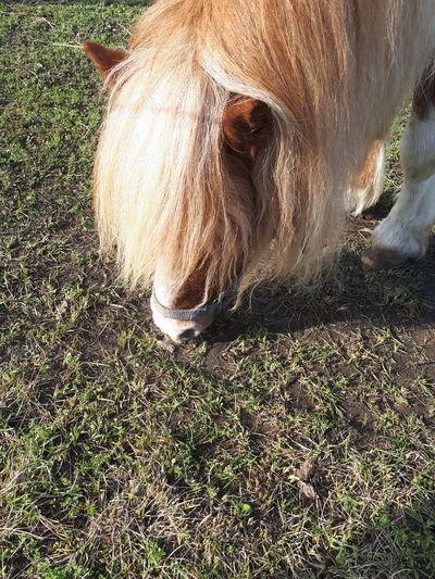 Horse Little Horse Pony Hair Brown Hair