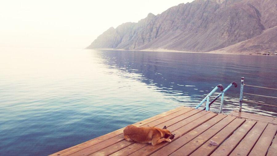 I want to go back!! :) Sea Holidays Egypt Dahab
