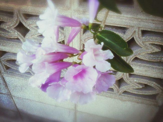 Taking Photos Relaxing Flower on side walk way.!!!
