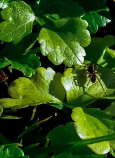Bug Spider Animals In The Wild Beauty In Nature Freshness Green Color Insect Leaf Nature Outdoors Plant Spider On Leaf Spiders Sunny Winter Day Under The Fig Tree Winter Sun