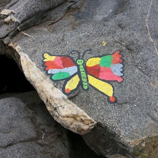 Mariposa Atrapada en la Roca