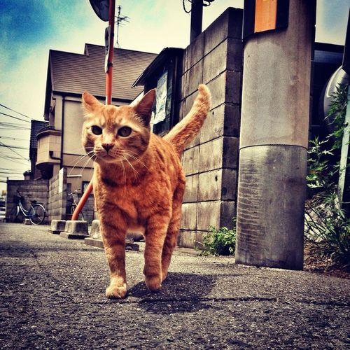 Cat 虫メセン